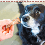A pin image of a black dog begging for a blueberry dog biscuit.