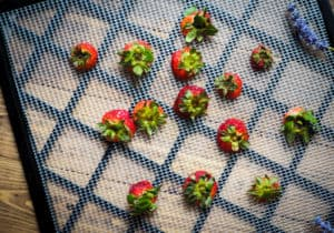 The tops of strawberries laid out on the tray of a dehydrator.