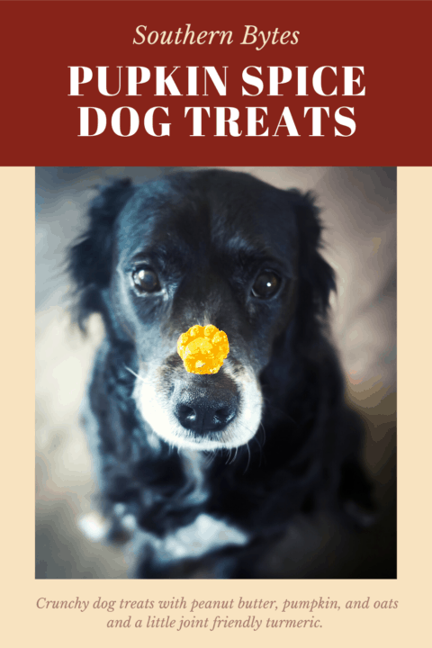 a pin image of a dog with a treat on her nose