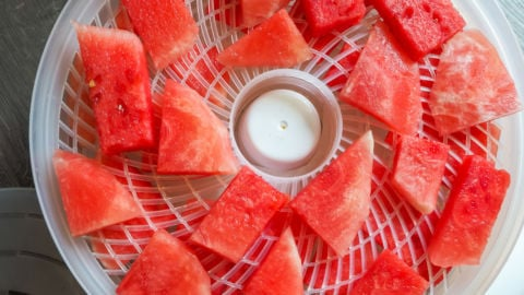 A dehydrator with slices of watermelon in it before dehydrating.