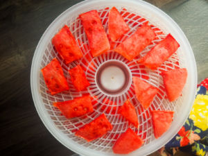 a dehydrator with slices of partially dried watermelon in it.