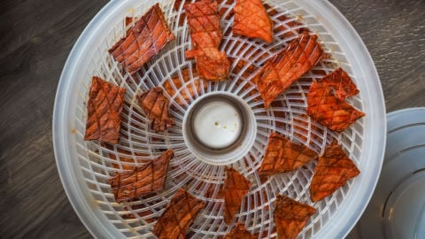 a dehydrator with slices of dried watermelon in it.