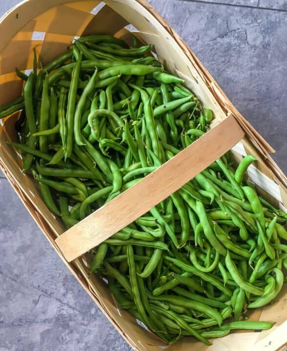 A basket of freshly picked green beans.