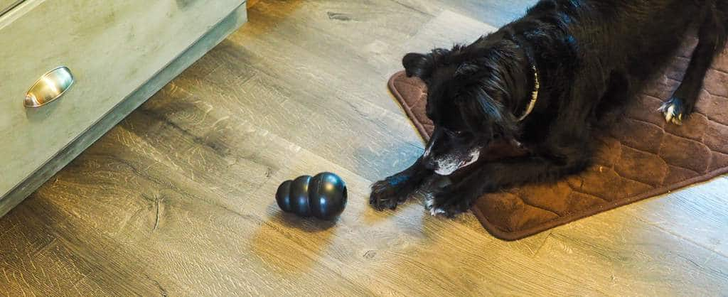 A border collie playing with a black toy on a gray wood floor and a brown rug.